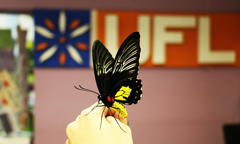 Доставка живых бабочек